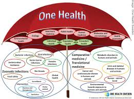 the evolution of one health a decade of progress and challenges