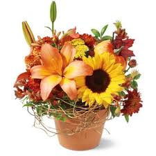 thanksgiving flowers gifts from your local columbus florist