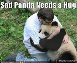 Sad Panda Meme - image 63388 sad panda know your meme