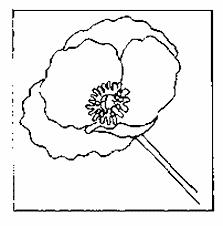 coloriage fleurs et plantes coquelicots à colorier allofamille
