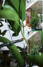 raw materials corp trellis and plant vining