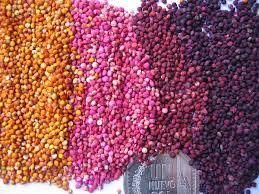 Names Of Purple by List Of Edible Seeds Wikipedia