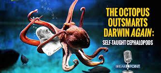 Seeking Octopus Breakpoint The Octopus Outsmarts Darwin Again