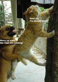 funny animals cat and dog dump a day