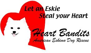 american eskimo dog washington state heart bandits american eskimo dog rescue home facebook