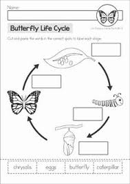 life cycle of a butterfly cut paste and write classroom