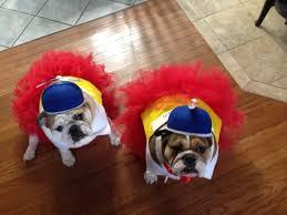 Tweedle Dee Tweedle Dum Halloween Costumes Dogs Halloween Costumes Tweedle Dee Tweedle Dum Lola