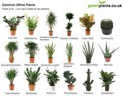 plant for office common office plants office plants interior plants and plants