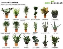 plants for office desk common office plants office plants interior plants and plants