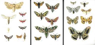 vintage insect prints butterfly prints ephemera scrapbooking