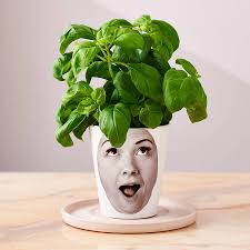 face planters personalised u0027face plant u0027 photograph plant pot by snapdragon
