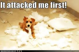 Pillow Fight Meme - saturday pet blogger hop pillow fight