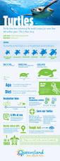best 25 what is marine biology ideas on pinterest marines