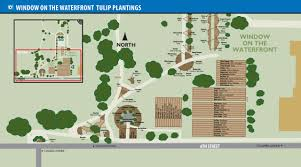 Tulip Festival Map 2017 Annual Tulip Dig Scheduled For May 20 City Of Holland