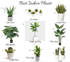 indoor plant best indoor plants best indoor house plants best indoor plants kelly
