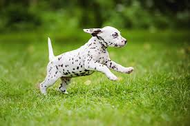 puppy pictures images stock photos istock