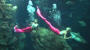 South Carolina snorkeling images Florida mermaids swimming at sc aquarium wciv jpg