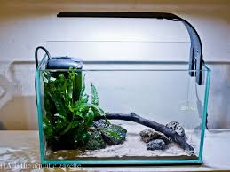 Aquascape Canada 177 Best Ide Aquascape Images On Pinterest Aquarium Ideas
