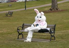 easter bunny books image result for easter bunny reading on bench black cat