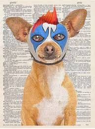 art n wordz lucha libre clown boy chihuahua wrestler original