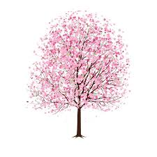 cherry blossom tree drawing cherry cherries