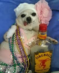 mardi gras jester ribbon dog 782 best mardi gras images on craft ideas louisiana and