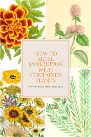 how to repel mosquitos with container plants u2013 brown floral events
