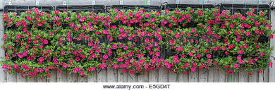 Hanging Wall Planters Wall Planter Stock Photos U0026 Wall Planter Stock Images Alamy