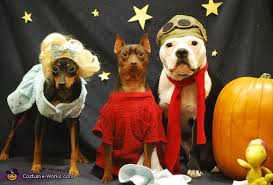 Charlie Brown Costume Charlie Brown Great Pumpkin Halloween Costume Ideas For Pets