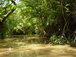 Adaptations Of Tropical Rainforest Plants - adaptations of the plants tropical rainforest
