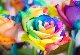 multicolor roses multicolor roses jigsaw puzzle puzzlemobi