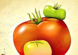ina garten tomato heirloom tomatos tomato salad ina garten tomatoes recipes pasta
