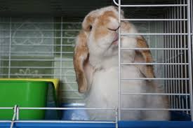 Rabbit Hutch Set Up How To Properly Set Up A Rabbit Cage Pet Supermarket Blog