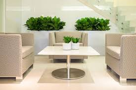 interior landscape plants interior design for home remodeling