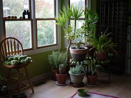 5 ways to keep your plants alive through the winter my decorative