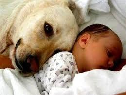 ребёнок и домашние животные