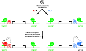 defining specificity of transcription factor regulatory activities