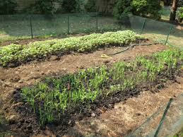 vegetable garden sun requirements vegetable garden simplicitysoil