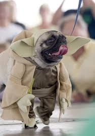 pug halloween costume for baby 35 best dog and cat halloween costumes 2017 cute pet costume ideas