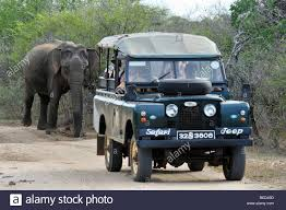 land rover jeep safari jeep land rover followed by elephant sri lanka asia stock