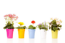 potted flowers potted flowers photograph by alexey stiop