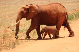 1 elephant beside on baby elephant free stock photo