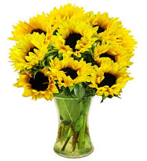 Vase Of Sunflowers Simply Sunflowers Farm Fresh Avas Flowers