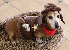 Mini Dachshund Halloween Costumes Cowboy Weiner Dog Love Gun Holster