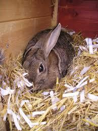 Make Rabbit Hutch The Lowdown On Rabbit Hutches