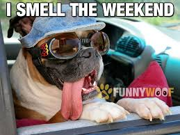 Meme Sweet - even dogs smell the sweet days of weekend get ready to party