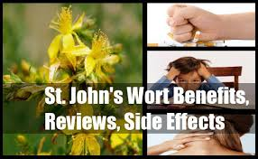 what side does a st go on st john s wort benefits reviews side effects and dosage