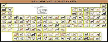 periodic table of dogs the dogs periodic posters
