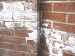 White Mold In Basement Dangerous by What U0027s That White Stuff On My Bricks