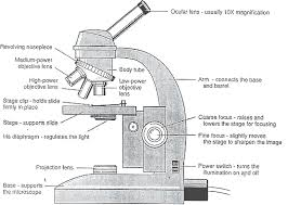 compound light microscope parts and functions microscope parts function 5 labeled parts of a microscope